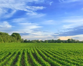 Investing in Row Crop Farmland