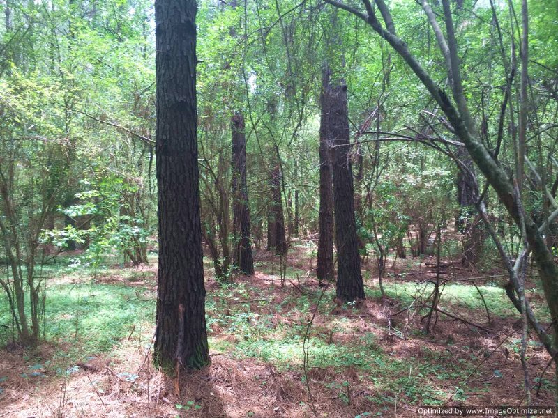 26.37 Ac Commercial Land : McComb : Pike County : Mississippi