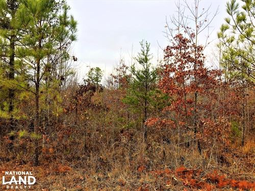 1.74 Acres Commercial Opportunity : Warrior : Blount County : Alabama