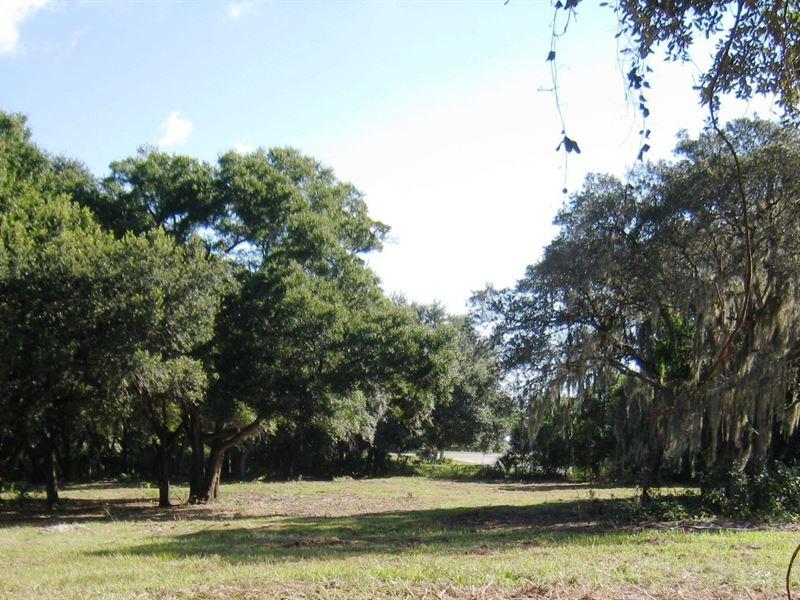Hwy, 60 Lake Wales Acreage : Lake Wales : Polk County : Florida