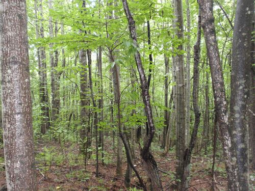 21.5 Ac. In Northern Greenville Co : Travelers Rest : Greenville County : South Carolina