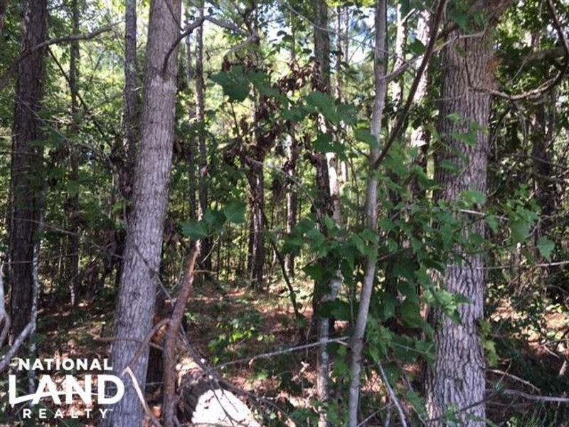 Talladega Commercial, Timber & Home : Talladega : Talladega County : Alabama