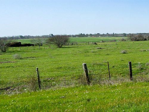 50.53 Acres Fm 2821 : Huntsville : Walker County : Texas
