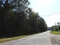 13.5 Ac, Wooded Tract For Commerci : Jasper : Jasper County : Texas