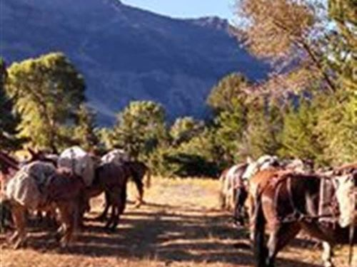 Two Successful Hunting Camps in th : Cody : Park County : Wyoming