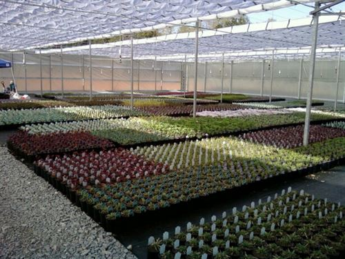Turn-Key Greenhouse On Secluded Lot : Spring Hill : Maury County : Tennessee