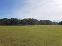 40 Acres Bordering The Villages : Summerfield : Marion County : Florida