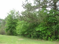 Old Hwy 98 3 Acres : Tylertown : Walthall County : Mississippi