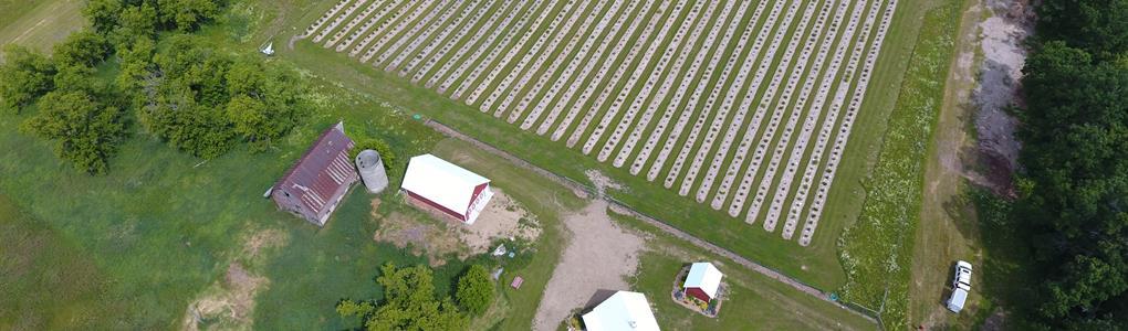 U-Pick Blueberry, Raspberry Farm : Lake Shore : Cass County : Minnesota