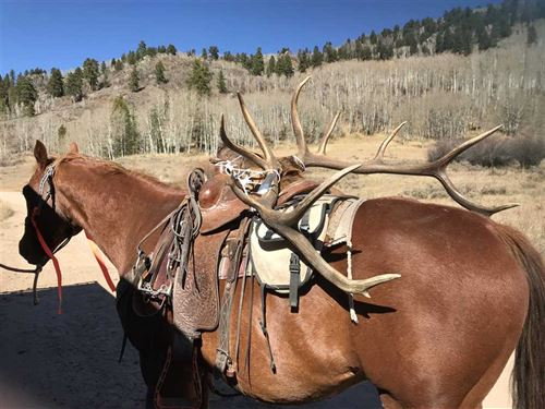 Colorado Outfitting/Guide Business : Oak Creek : Routt County : Colorado