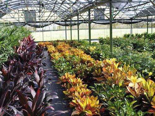 Lake County Foliage Nursery Property