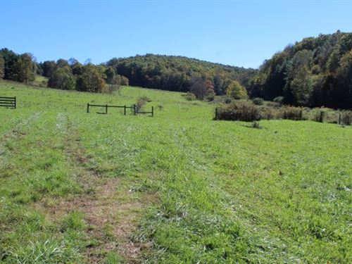 69.9 Acres Land Carroll County : Laurel Fork : Carroll County : Virginia