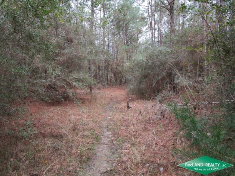 36.04 Ac, Wooded Tract For Develop : Kountze : Hardin County : Texas